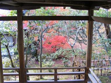 庭先の紅葉.jpg