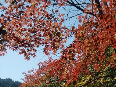 愛岐トンネルの紅葉.jpg