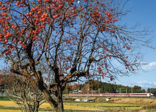 柿がある風景.png